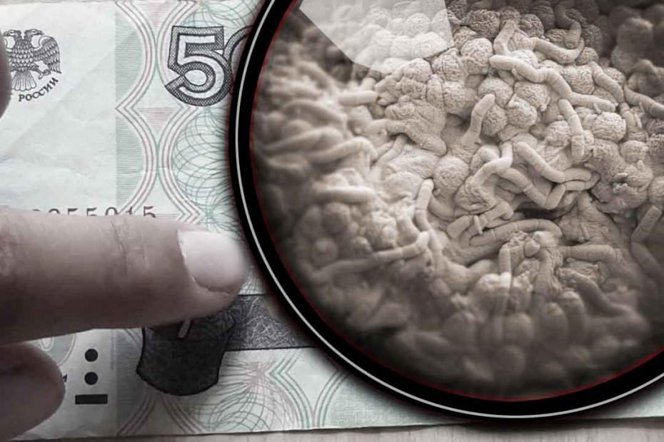 Микробы на деньгах