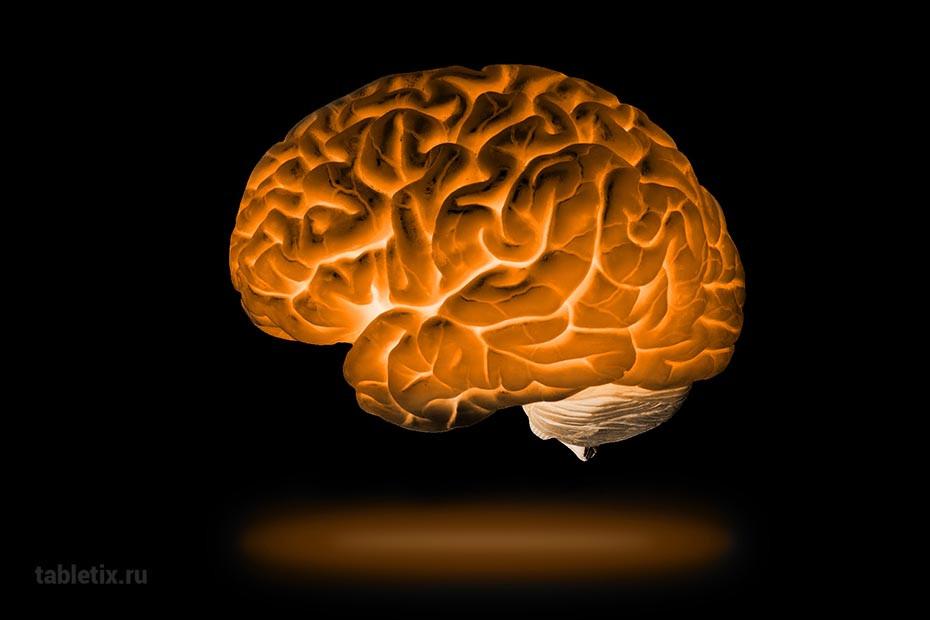 Объем памяти мозга