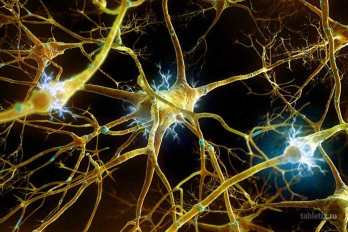 Нейрофизиология мозга