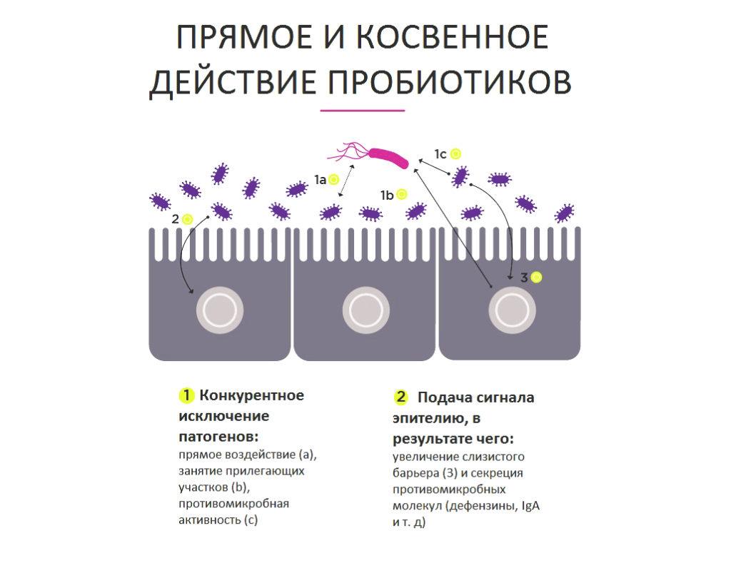 Как работают пробиотики